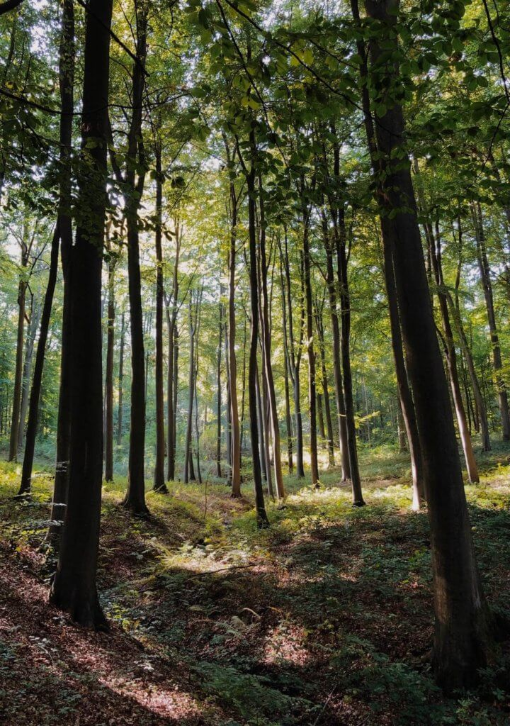 sonian forest a short drive from BBF apartments in woluwe-saint-lambert